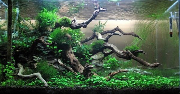 how to find driftwood for aquarium