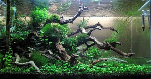 Aquarium Drift Wood What To Buy And Where To Buy It