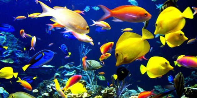 Colorful Aquarium Fish Add A Splash Of Color To Your Freshwater Tank