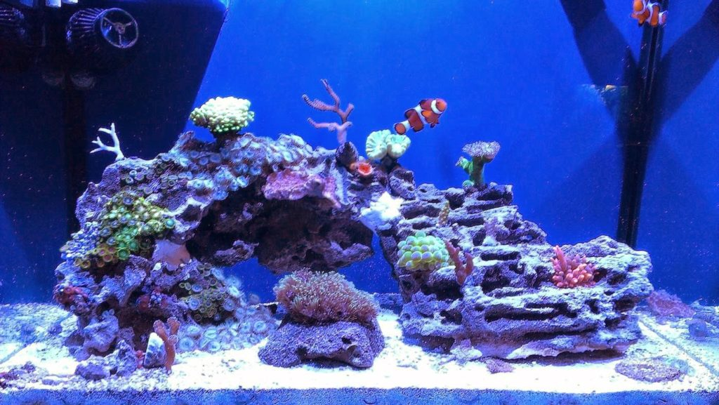 Aquascape Ideas - 10 Top Aquascape Ideas - Aquascape Ideas ...