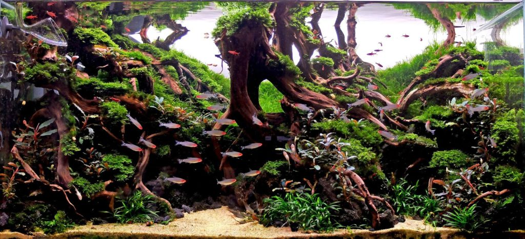 10 Top Aquascape Ideas - AquariumBros